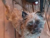 Col. Potter Cairn Terrier Rescue