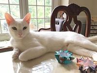 Gardenia18's story All Purr Partners Adoptable