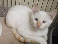 My story Gareth is a flame point Siamese mix with