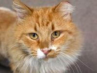 Garfield's story What could be better than a handsome,
