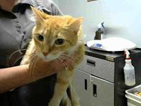 GARFIELD's story The Tallahassee-Leon Community Animal