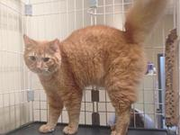 Garfield's story You can fill out an adoption