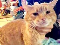 Garfield's story Sweet ginger who needs a home! Located