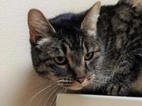 Gary's story Meet Gary! A handsome 11 year old Domestic