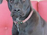 Gary's story My name is Gary Gary is a 9-month-old Lab/