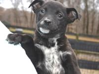 **GARY JUST ARRIVED AT THE RESCUE AND WILL BE AVAILABLE