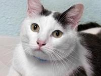 Gato's story Gato is a sweet and  scared young guy