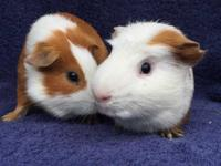 Gatwick & Jerez are a bonded pair of males that are