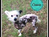 Gavin's story Our Rockers Rescue pets are