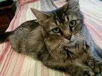Gemma's story My name is Gemma. I am a sweet cat who