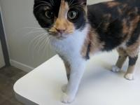 This gorgeous gal is a recent animal control rescue