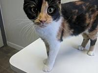 Gemma's story This gorgeous gal is a recent animal