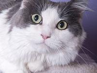 Gemma's story Gemma is a gentle, shy and sweet,