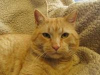 Gene's story Gene is a handsome, big boy who loves chin
