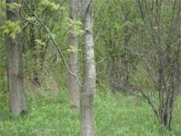 . Simply beautiful 5 acre wooded lot located in