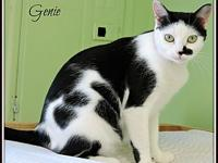My story Genie is quite a character. She's a sweet cat,