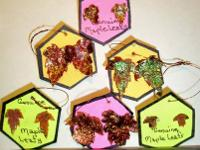 Handcrafted actual Maple Leaf earrings! All leaves