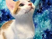 Geordi's story This adorable cat is searching for their