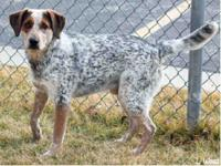 George is an approximate 10-month-old, unaltered male,