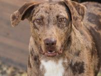 George is a 2 year old catahoula mix, energetic, happy,