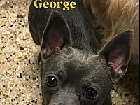 GEORGE's story TO MEET AND FOR MORE INFO CALL NO TEXT