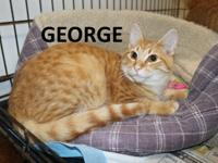 Meet George! He is a very sweet cat needing a good