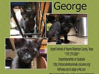 George's story * All kittens will be fully vetted and