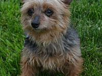 George's story George is a male, 7 year old Yorkie who