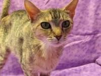 Georgia's story 18-C07-005 Georgia Breed: DSH Mix Size: