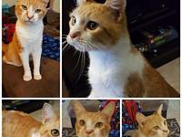Georgie's story This animal has been declawed and