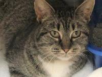 Geranium is a gorgeous tabby cat. She is about 2 years