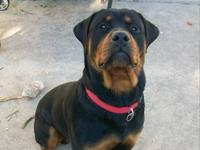 I have a German rottweiler his 3years . He has a very