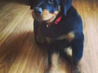 I have a Rottweiler puppy I am looking for a good home