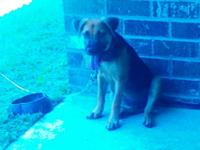 I have a 4 month German sheaperd chow Mix puppy for