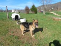 Checz German Shepherds. High quality. Bred for