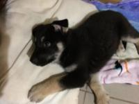Offered By : Owner i am 11weeks old. I am raised in my