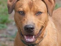 German Shepherd Dog - Bender - Medium - Young - Male -