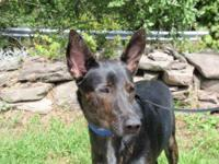 German Shepherd Dog - Francis - Large - Young - Male -