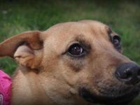 German Shepherd Dog - Lily - Medium - Young - Female -