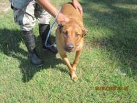 German Shepherd Dog - Malkie - Medium - Adult - Male -