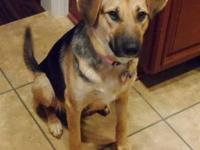 German Shepherd Dog - Maxine - Large - Adult - Female -