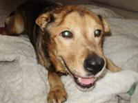 German Shepherd Dog - Mikey - Medium - Adult - Male -