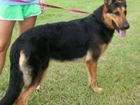 German Shepherd Dog - Nita - Large - Young - Female -