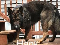 RI - West Warwick German Shepherds are known to be one