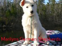 Tiger Lily's Mr. Emerald Isle is a white male puppy,