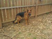 this ishould a black and red akc registered stud Dog