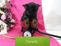 Danelle is AKC registered purebred German Shepherd