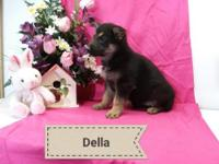 Della is AKC registered purebred German Shepherd puppy