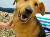 German Shepherd Dog - Rose ~ 3 Years Old! - Large -