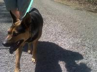 German Shepherd Dog - Sally - Medium - Young - Female -